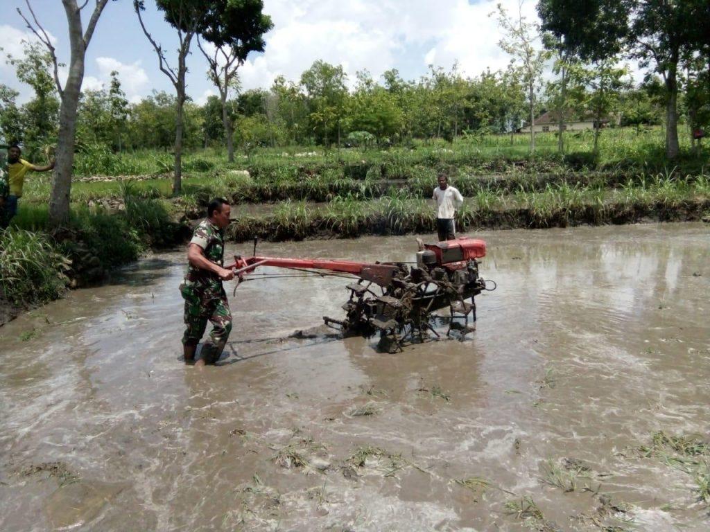 Mengolah Sawah Dengan Traktor Ternyata Memiliki Banyak Manfaat